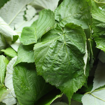 How to Make Raspberry Leaf Tea-DIY